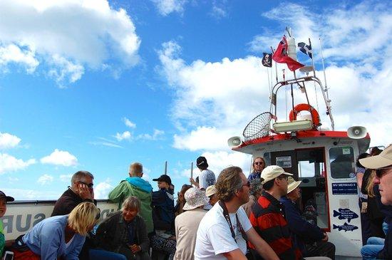 Mermaid Pleasure Trips: Boat