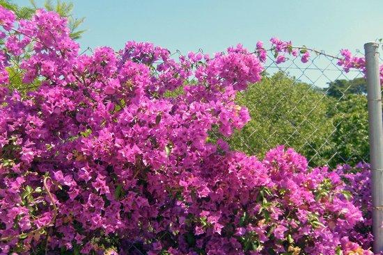 Parc de Montjuic : Очень красивые цветы. Как они называются?