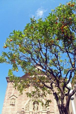 Parque de Montjuic (Parc de Montjuïc): Апельсиновое дерево