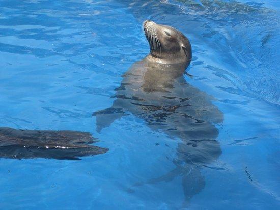 Marineland Majorca: Sealion Sleeping