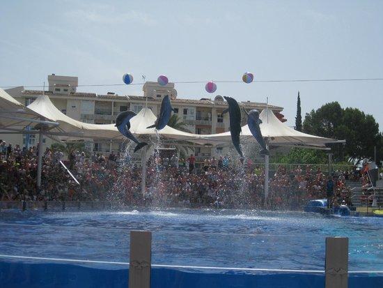 Marineland Majorca: Dolphin Show