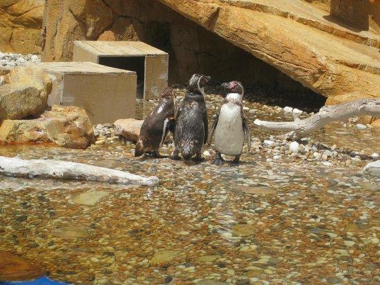 Marineland Majorca: Penguins