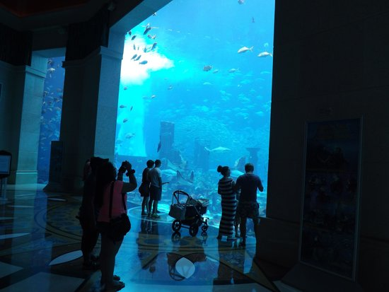 Atlantis, The Palm: Hotel aquarium