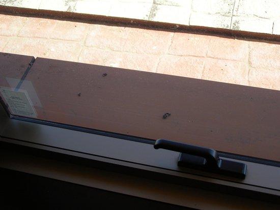 Alejandro 1 Hotel Internacional Salta: Excremento de palomas en las ventanas