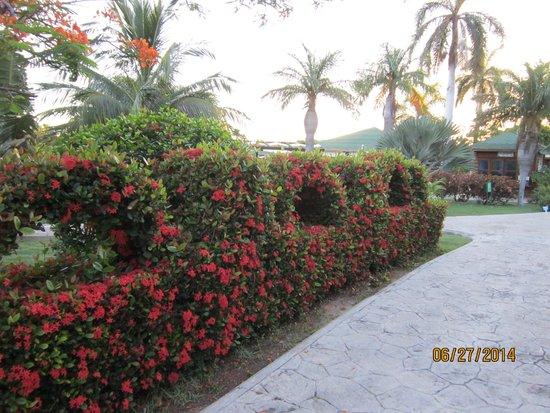 Blau Varadero Hotel Cuba: Some nice gardening