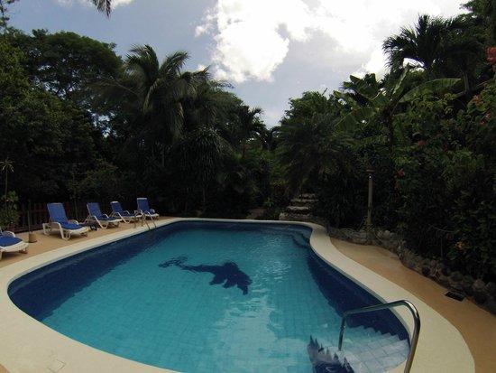 Hotel Belvedere - Playa Samara: Poolside at Hotel Belvedere