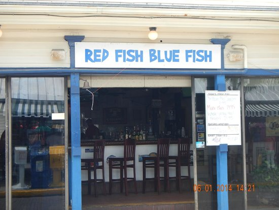 key west red fish blue fish picture of red fish blue