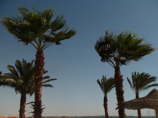 Amwaj Blue Beach Resort & Spa: Beach palm trees