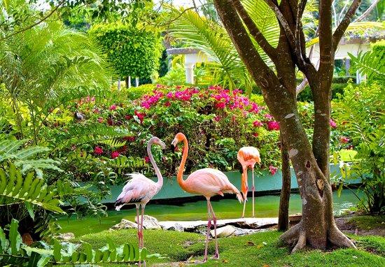 Iberostar Grand Hotel Bavaro: real flamingo habitat