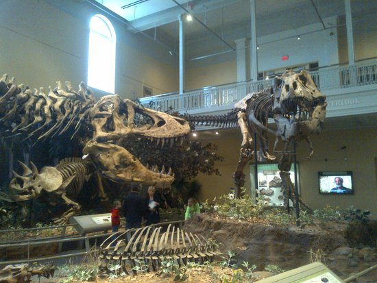 Carnegie Museum of Natural History : T REX