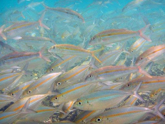 Hideaway Island Marine Reserve : Hideaway Island - so many fish!