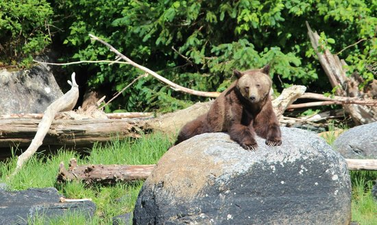 Tide Rip Grizzly Tours: Relaxation