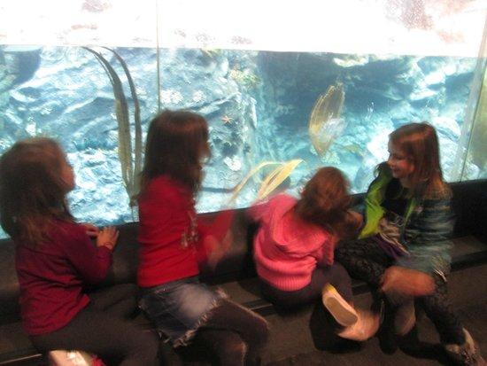 National Aquarium : Fish Tank @ Aquarium before the dolphin debacle!