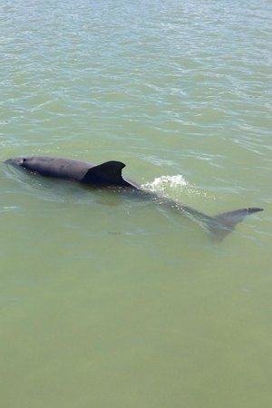 Dreamlander Tours: One of the many dolphins we saw