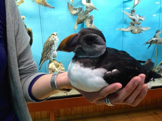 Guesthouse Hamar : See puffin in the wild and at the local 'aquarium.'