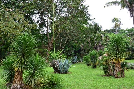 Royal Botanical Gardens: Голубая агава и другие