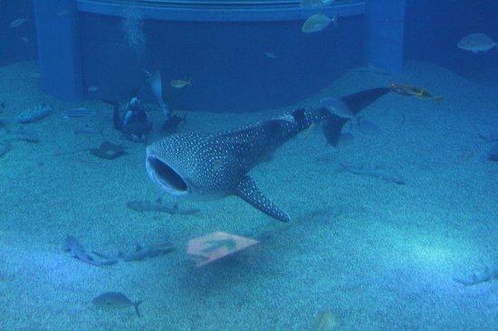 Osaka Aquarium Kaiyukan: 一番大きかった