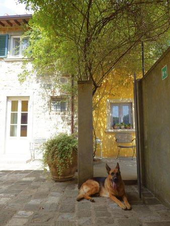 Villa Di Campolungo Agriturismo: The owner's adorable German shepard