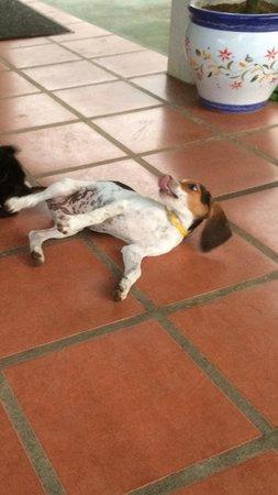 Blue River Resort & Hot Springs: Little Perrito! Actually, her name is Calva.
