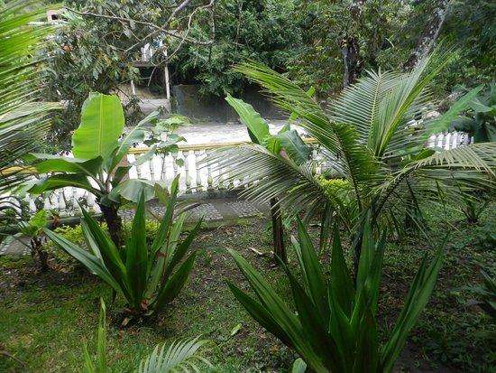 Rio Selva Resort - Yungas : Vista desde habitación