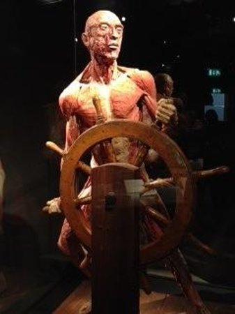 Body Worlds : A sailor minus his skin showing muscle formation