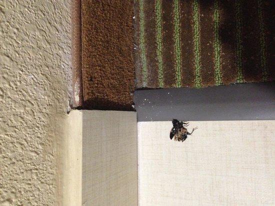 La Quinta Inn Austin North: bug 2