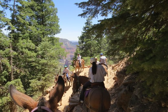 Canyon Trail Rides: Walking down