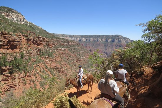 Canyon Trail Rides: What a view