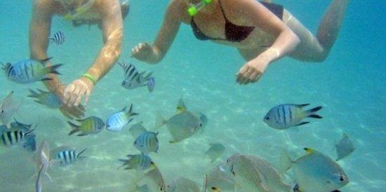 Broadwater, Australia: Snorkeling fun