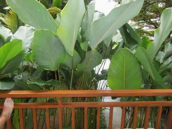 Naithonburi Beach Resort: garden