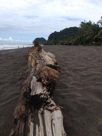 Sandpiper Hotel: beach