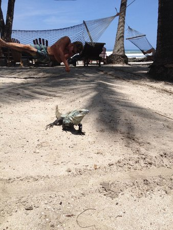 Hotel Tropico Latino: buddy on the beach