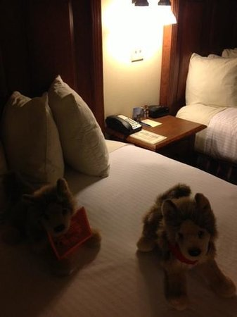 The Lexington at Jackson Hole: Lexi dog on bed
