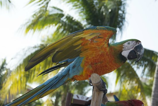 Grand Bahia Principe Coba: Beautiful Parrots by the Activity Pool