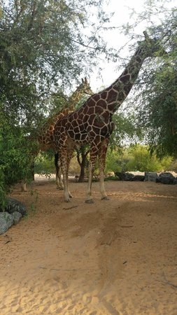 Anantara Sir Bani Yas Island Al Sahel Villa Resort: Amazing experience