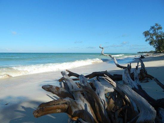 Kinondo Poa: Indian Ocean
