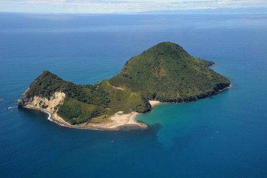 White Island Flights : Moutohora, Whale Island