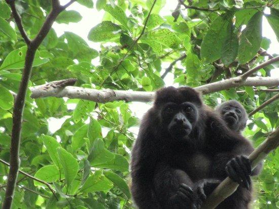 Chocoyero-El Brujo Natural Reserve: Mother and child