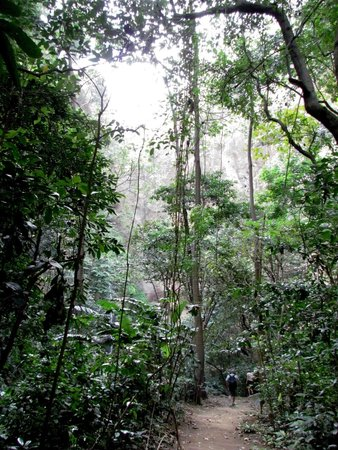 """Chocoyero-El Brujo Natural Reserve: """"It's a jungle out there!"""""""
