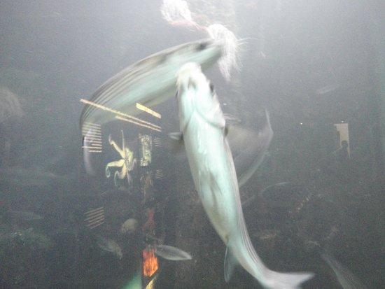 Aquarium de Biarritz : aquarium