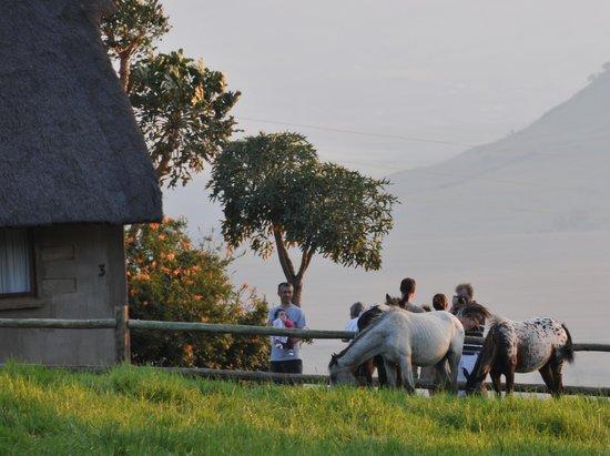 Berghouse and Cottages: Thokomala cottage