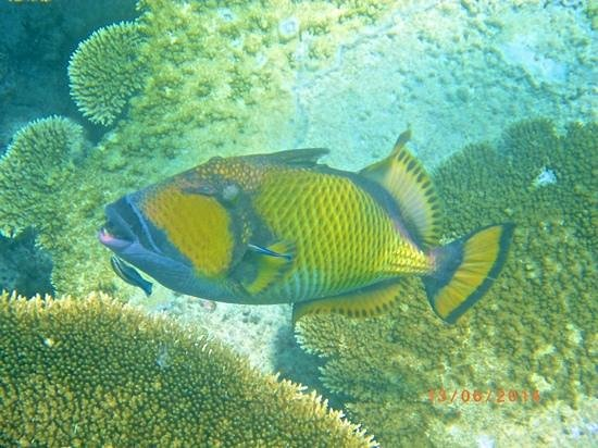 Ellaidhoo Maldives by Cinnamon : trigger fish