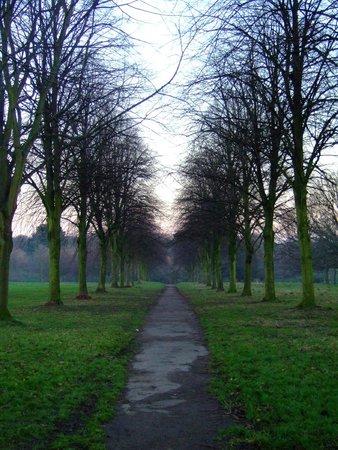Sefton Park: Tree Lined Walkways