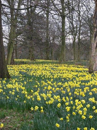 Sefton Park: Marie Curie Field of Hope