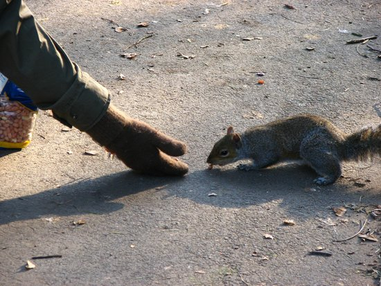 Sefton Park: Feeding the Squirrels