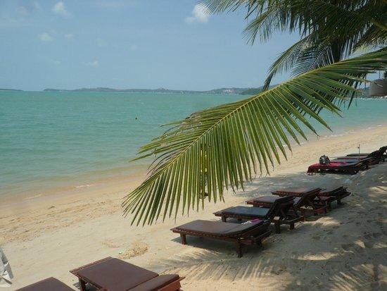 World Resort Bungalow : Выход к пляжу