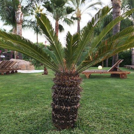 Melia Marbella Banus: Family pool - mini palm trees