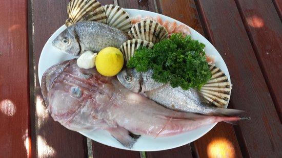 Banjole, Κροατία: Pesce fresco, cozze e scampi