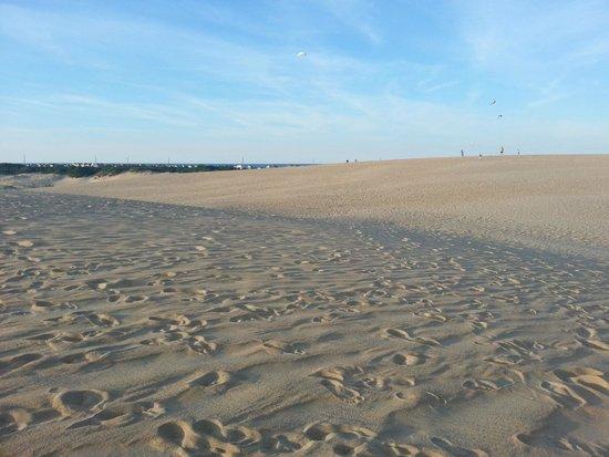 Jockey's Ridge State Park: dunes2