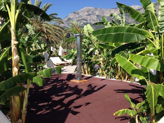 Club Med Palmiye : so many banana plants at the shower area